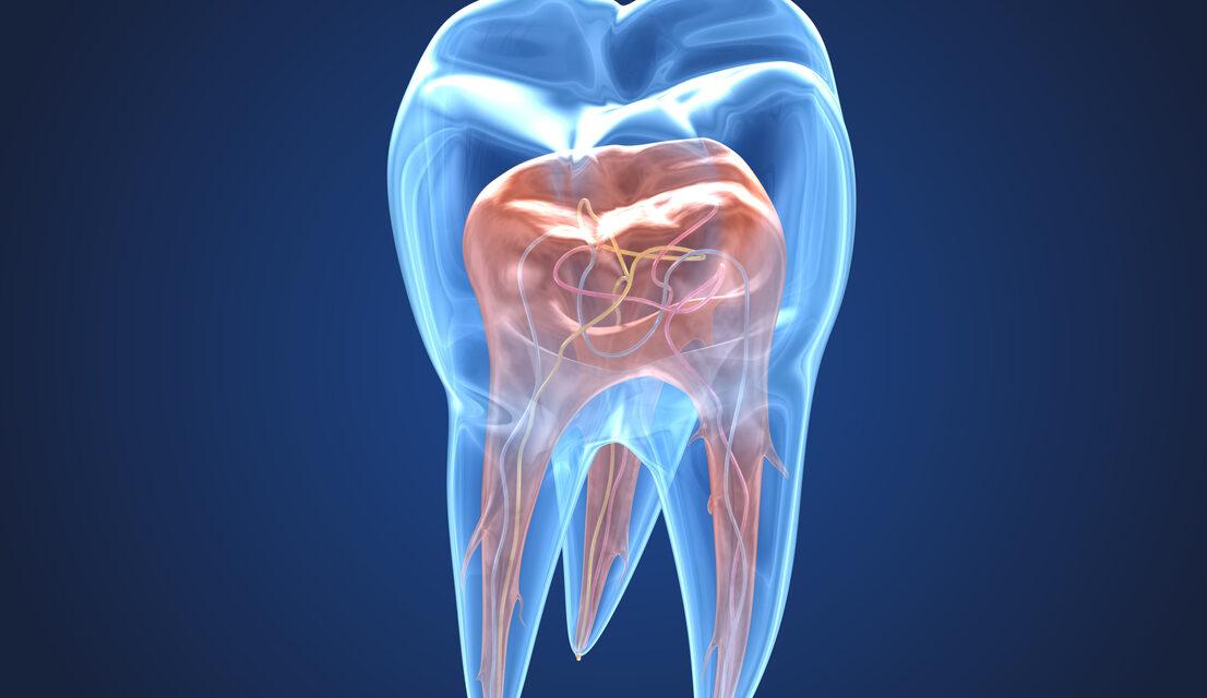 Endodonzia cos'è
